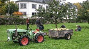 Apfelernte im Klostergelände